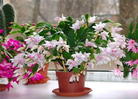 cvety_v_gorshkax_v_obi_01