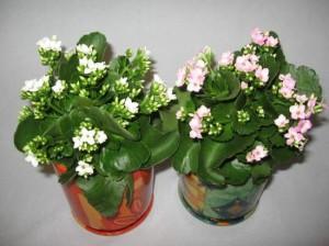 cvety_v_gorshkax_v_obi_05
